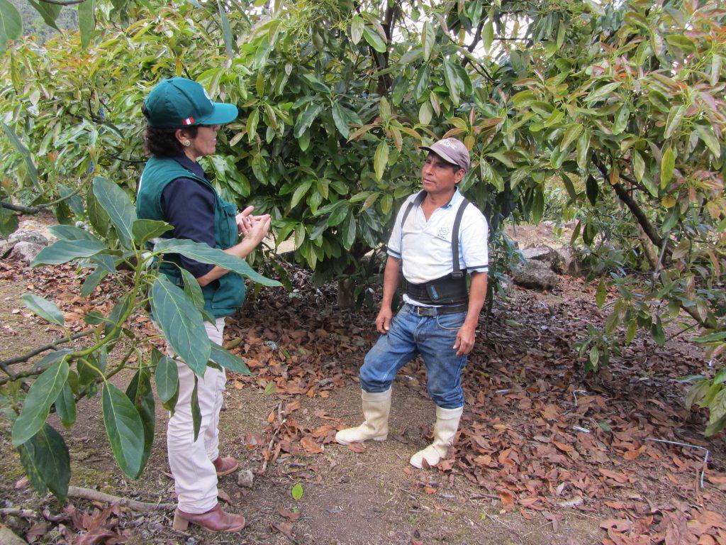 Diálogo con el personal responsable del Fundo Las Palmeras