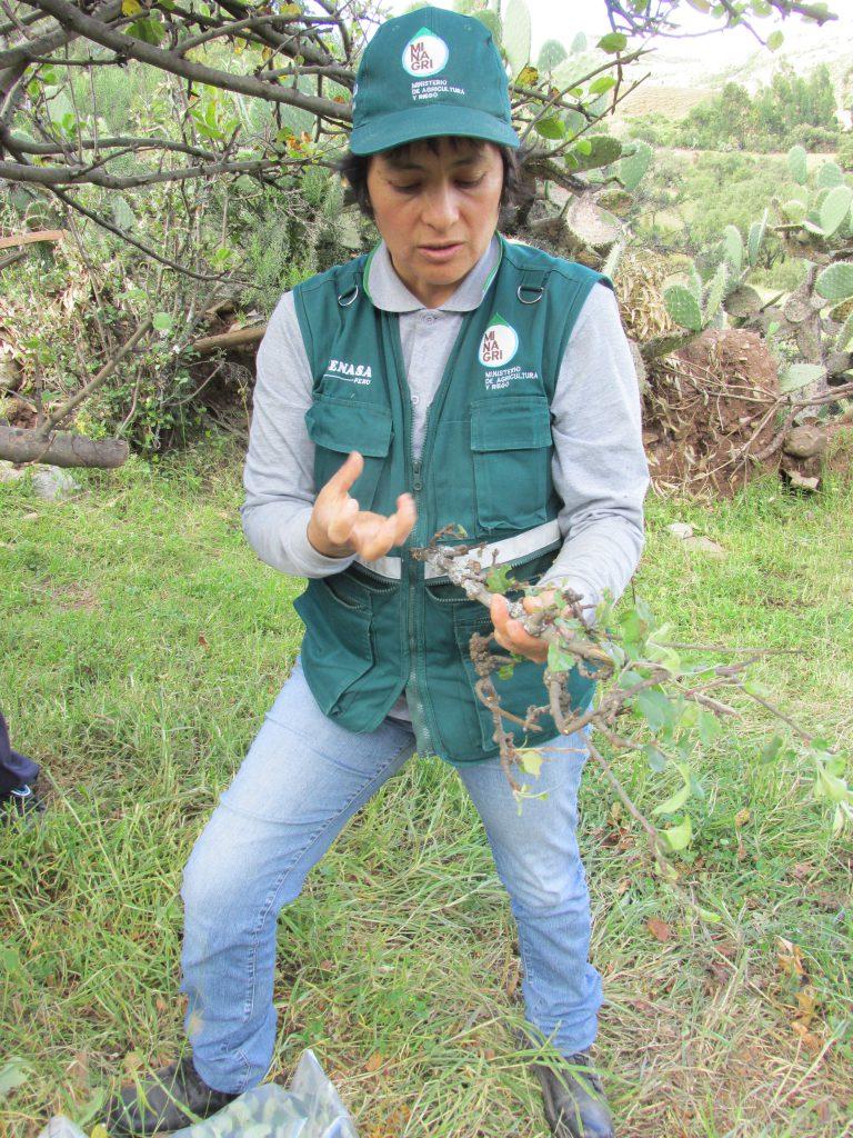 Inspección fitosanitaria - SENASA