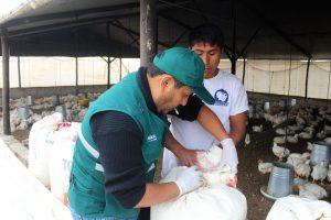 SENASA Arequipa - Sanidad Animal