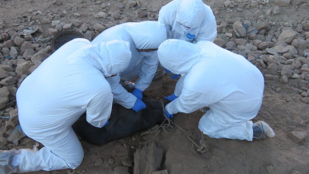 Los especialistas del SENASA tomando muestras al porcino 06