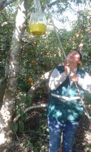 Madre de Dios - Moscas de la Fruta