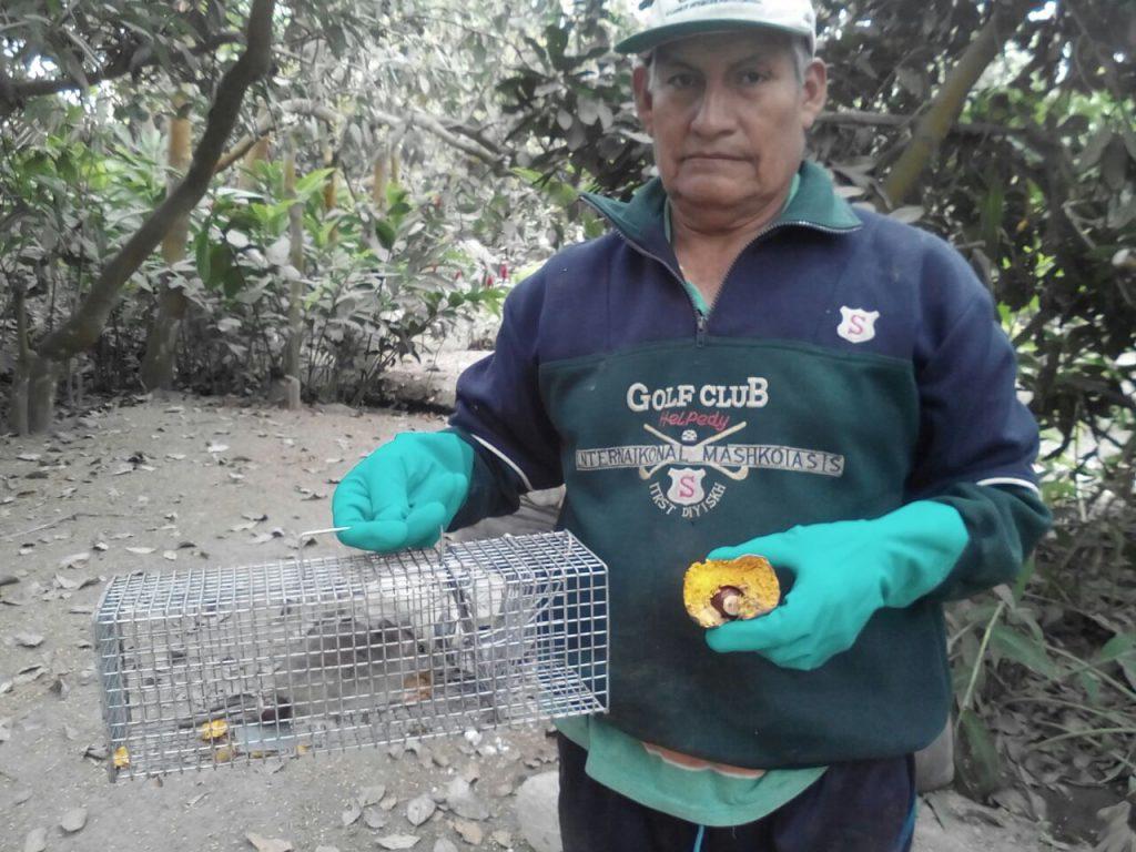 Senasa - Vigilancia de plaga de roedores