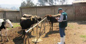 Inspección de matadero de Chachapoyas
