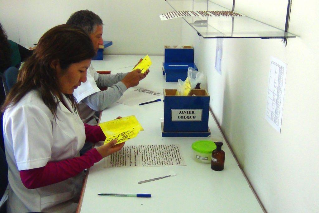 2.- Extracción de especimenes de trampas JT