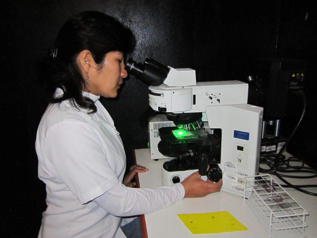 4.- Diferenciación estéril-fertil en microscopio epifluorescente