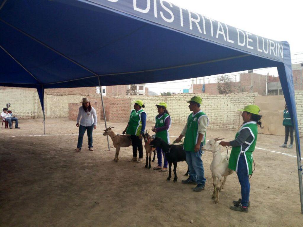I Feria Caprina de la Cuenca del Río Lurín
