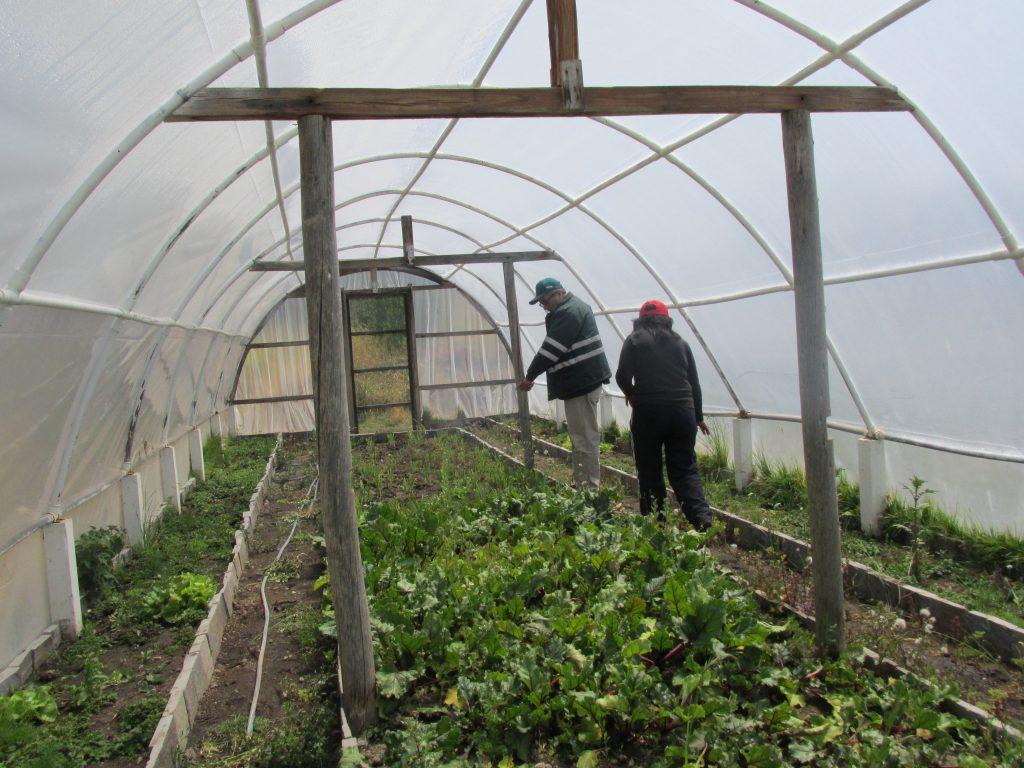 Producción orgánica en Ayacucho