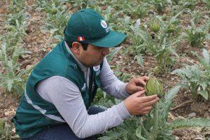 Vigilancia en cultivos de Junín