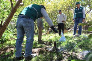 Control de plaga de roedores en Arequipa