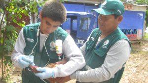 Senasa vacuna más de 2500 aves contra enfermedad de Newcastle