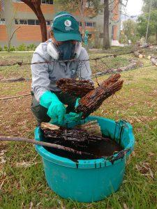 e-appst-014-02-12-2016-lSenasa: El cebo tóxico, una alternativa para el control de langostas