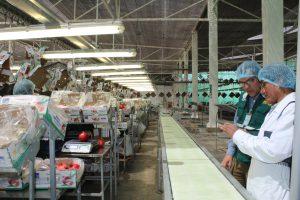 Senasa: Primer embarque de exportación de uva por el puerto de Matarani