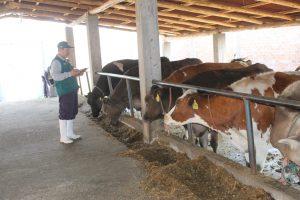 Certificación de establos libres de brucelosis garantiza estado sanitario de ganado bovino