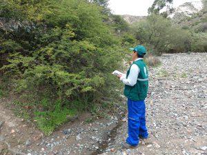 Senasa - Controladores biológicos para combatir la plaga de langosta
