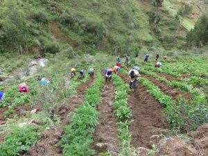 Senasa - ECA, una metodología de aprendizaje para agricultores