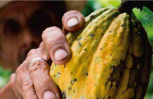 Senasa - Mazorquero del Cacao