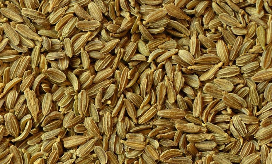 Senasa Semillas Zanahorias Senasa Al Dia También vendemos sobres de 100 gramos para semi profesional, descubrelas en el producto zanahoria nantesa. servicio nacional de sanidad agraria del peru senasa