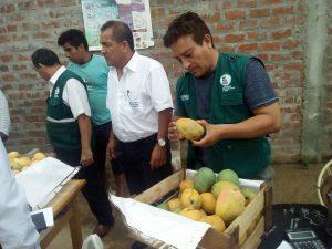 Senasa - Cuarentena interna para prevenir ingreso de moscas de la fruta