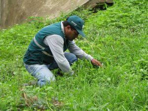Senasa extrema vigilancia en zonas agrícolas afectadas por lluvias