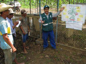 Senasa - ECA de MIP banano contribuye a mejorar producción de pequeños productores