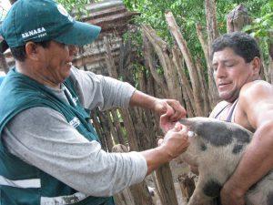Senasa - Vacunación contra la Peste Porcina Clásica en caseríos alejados de Tumbes