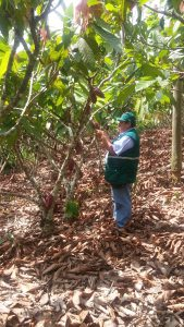 Senasa evalúa predios de cacao en Oxapampa