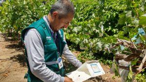 Senasa - Monitoreo de plagas no presentes en el cultivo de uva
