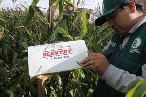 Senasa - Vigilancia fitosanitaria de plagas cuarentenarias no presentes en el Perú