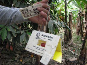 Senasa - Monitoreo de incidencia de plaga Mosca de la Fruta