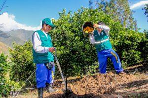 Senasa - Erradicación de Moscas de la Fruta en el Valle de Nepeña