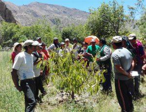 Senasa - Capacitación a productores en el manejo integrado del cultivo de palto