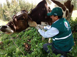 Senasa - Vigilancia epidemiológica pasiva de enfermedades en bovinos