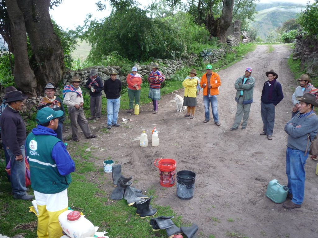 Senasa mantiene bajo controla plaga de langostas en el Cusco