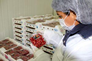 Senasa certifica exportación de arilos frescos de granada