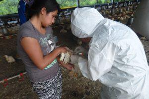 Senasa evalúa granja del distrito de San Luis de Shuaro