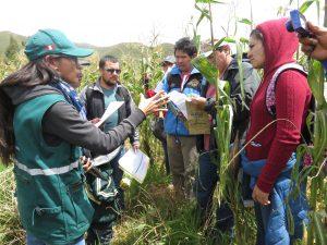Senasa.Cusco1