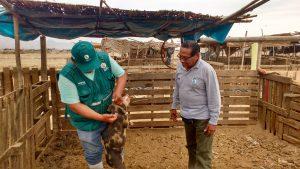 Senasa promueve buenas prácticas ganaderas en zonas afectadas de Ica