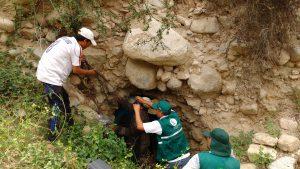 Senasa - Vigilancia de rabia en zonas altoandinas de Ica afectadas por las lluvias