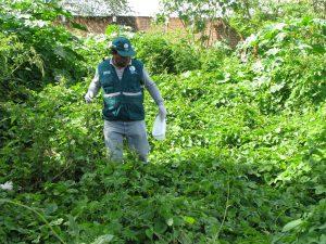 Senasa - Vigilancia de caracol africano en zonas afectadas por lluvias