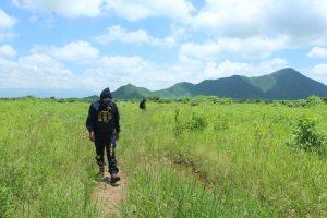 Senasa ejecuta medidas preventivas para el control de langostas