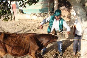 Campaña de vacunación gratuita contra el Ántrax en zonas vulnerables