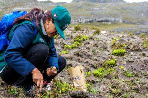 Senasa inspecciona cultivos de papa afectados por lluvias
