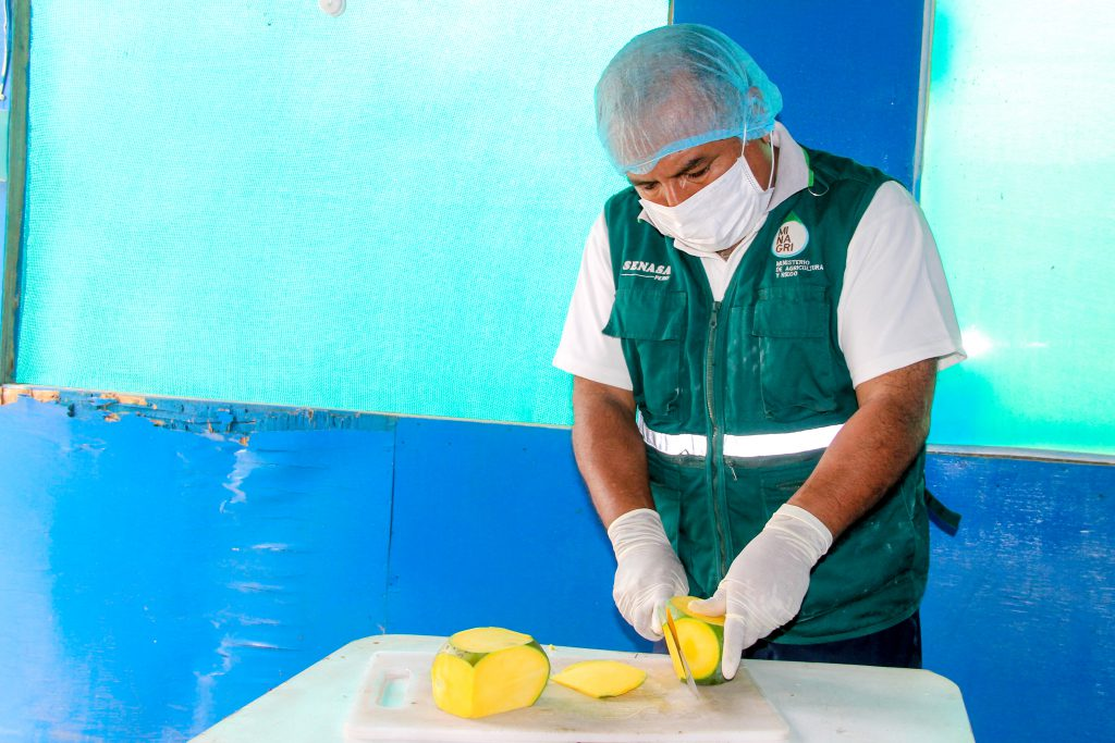 Senasa inspeccionó más 36 mil toneladas de mango en campaña 2017