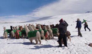 Senasa establece medidas preventivas por bajas temperaturas en Puno
