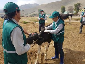 Senasa atenderá a 500 animales en campaña sanitaria gratuita