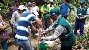 Senasa - Charlas demostrativas del Senasa a productores de copoazú, cacao y naranja