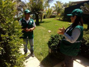 Senasa vigila plantaciones de Murraya para descarte de plagas en Piura