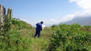 Senasa amplía monitoreo y vigilancia de langosta a zonas de riesgo