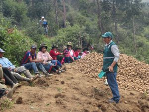 Senasa trabaja con agricultores para enfrentar polilla de la papa