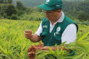 Senasa - Evaluación de cultivos de importancia económica en Selva Central
